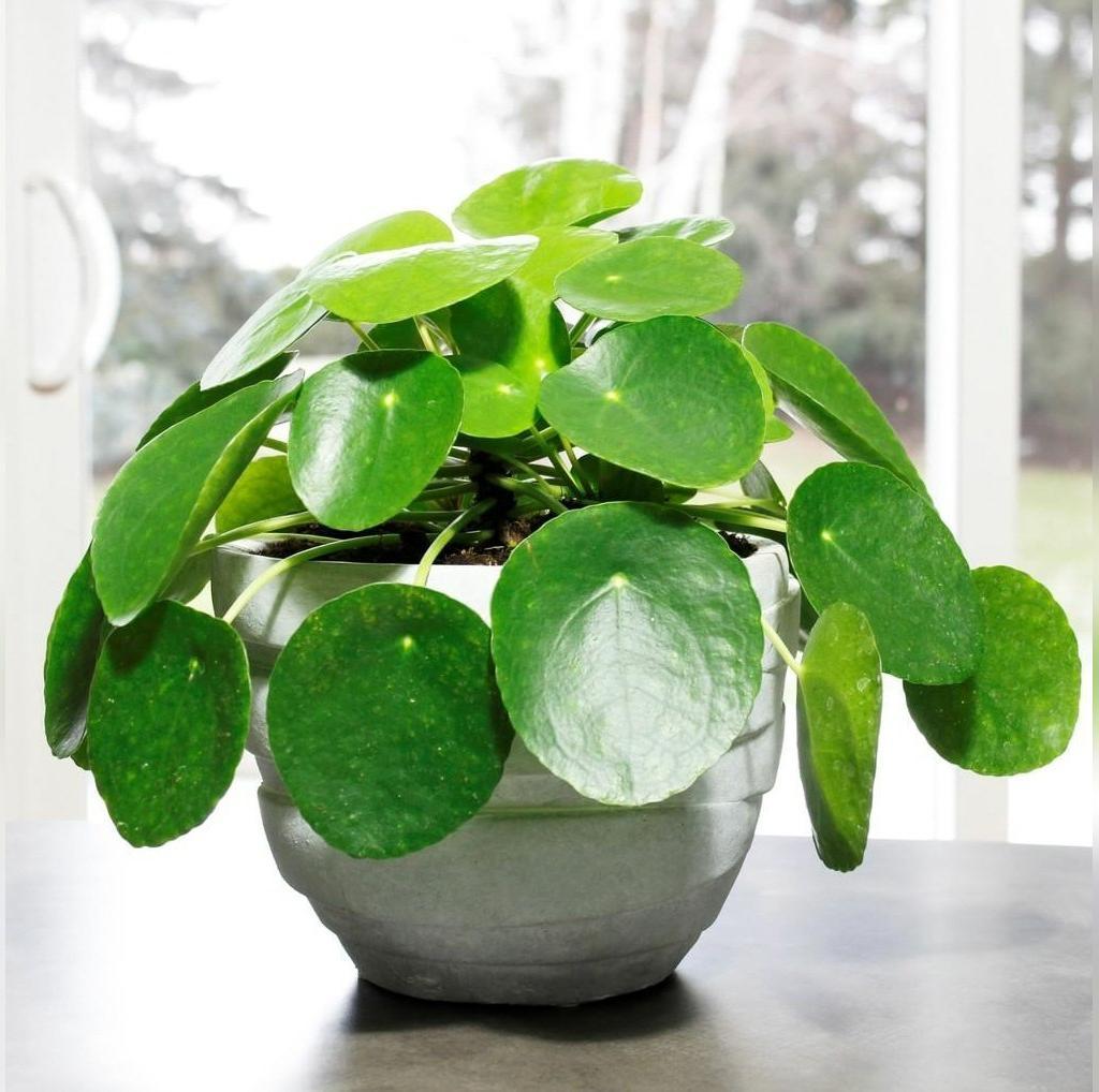 مقاوم ترین گیاهان آپارتمانی کدامند