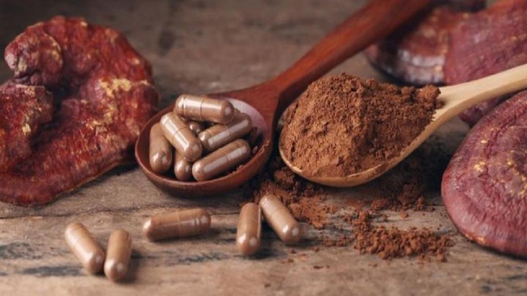 خواص قارچ گانودرما برای سلامتی و پوست در طب سنتی و عوارض