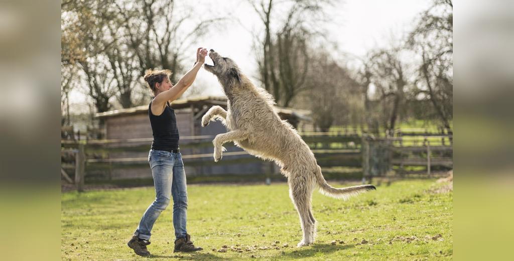 سگ های قدرتمند جهان
