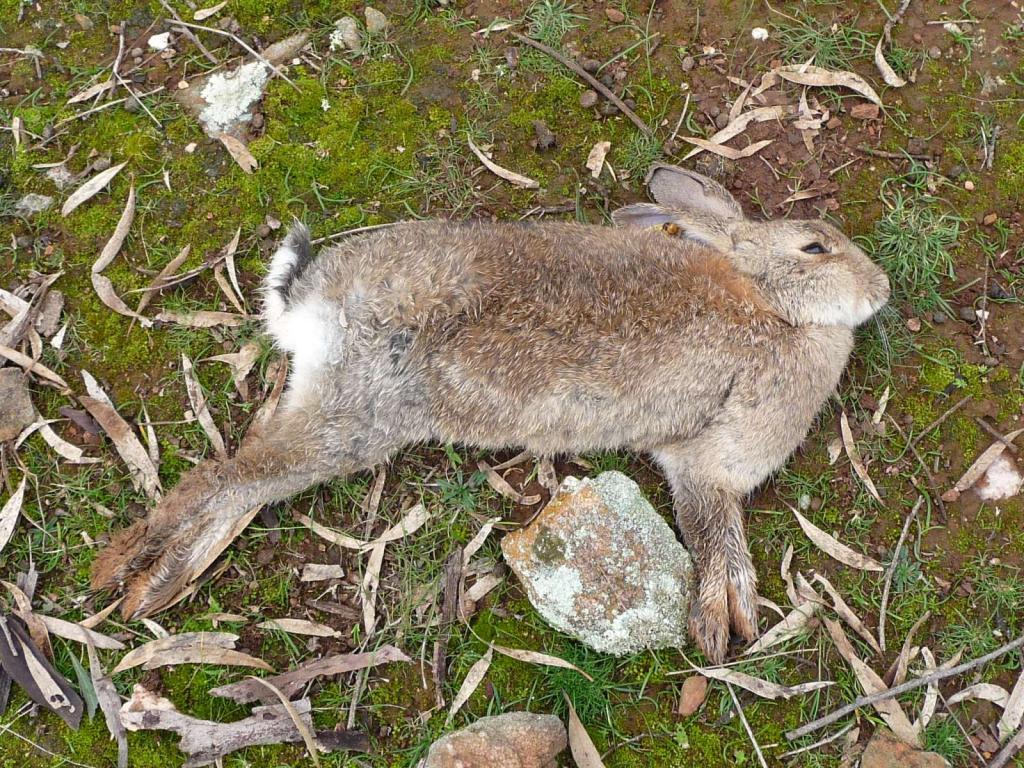 بیماری های رایج خرگوش ها