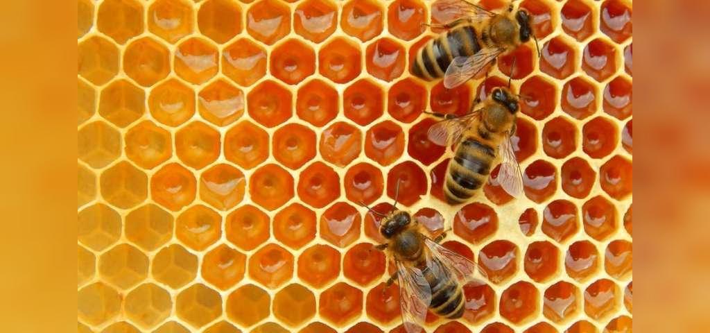 تولید موم زنبور عسل