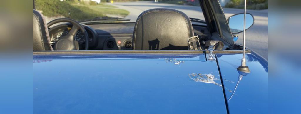 آسیب فضولات پرندگان به رنگ خودرو