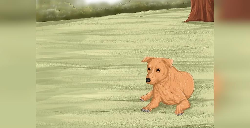 جلوگیری از ایجاد عفونت چشم سگ