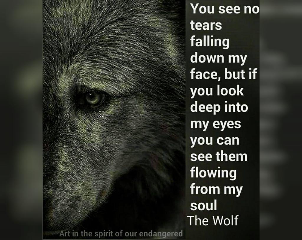 عکس نوشته انگلیسی درباره گرگ برای پروفایل