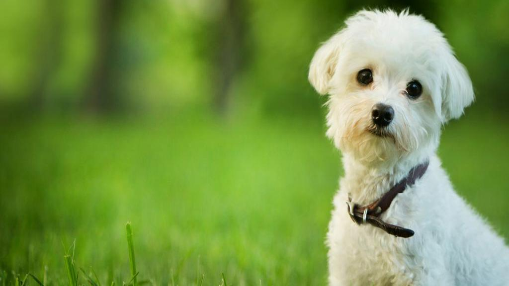 چگونه با از دست دادن حیوان خانگی محبوب کنار بیاییم؟