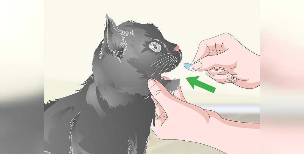 دارو برای جلوگیری از استفراغ گربه