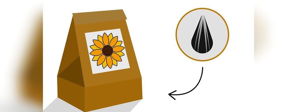 روش پرورش گل آفتابگردان در گلدان