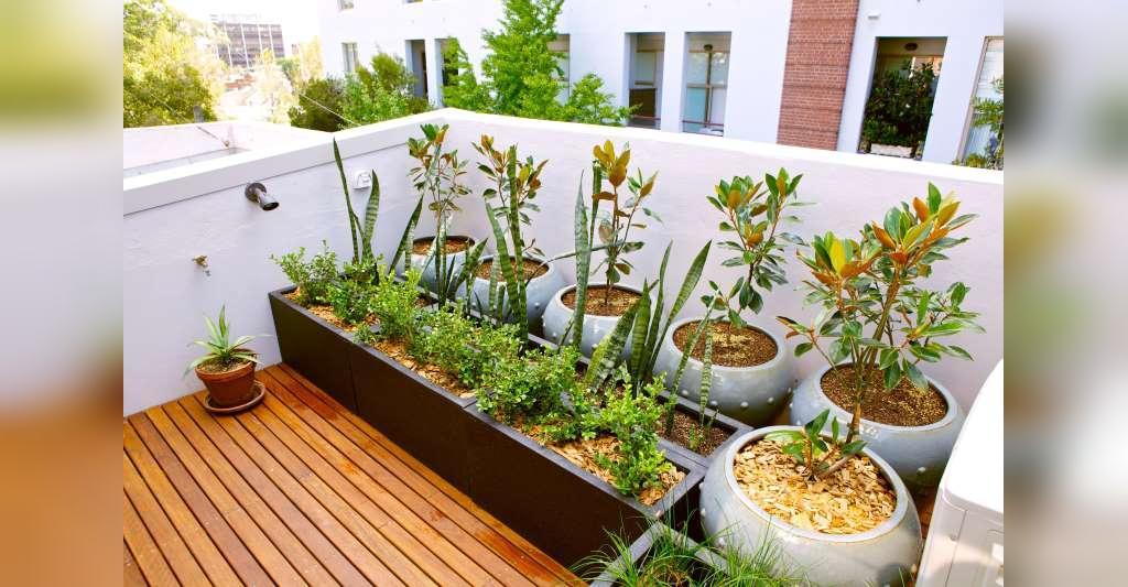 آموزش ساخت یک باغچه روی پشت بام