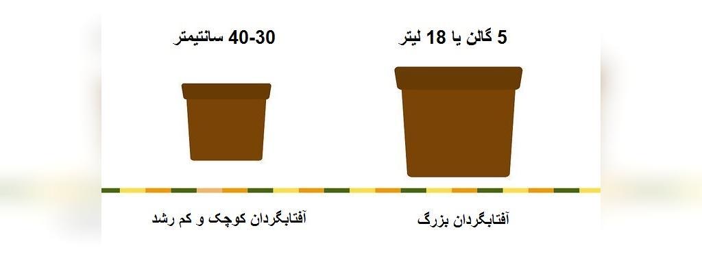 آموزش روش کاشت گل آفتابگردان در گلدان