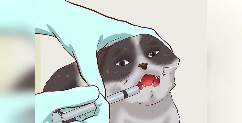 داروهای تجویز شده برای درمان یبوست گربه