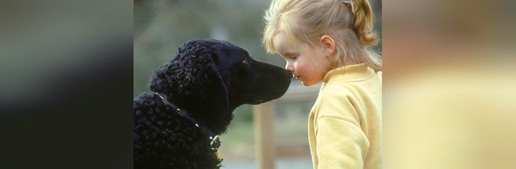 دانستنی های جالب درباره سگ ها