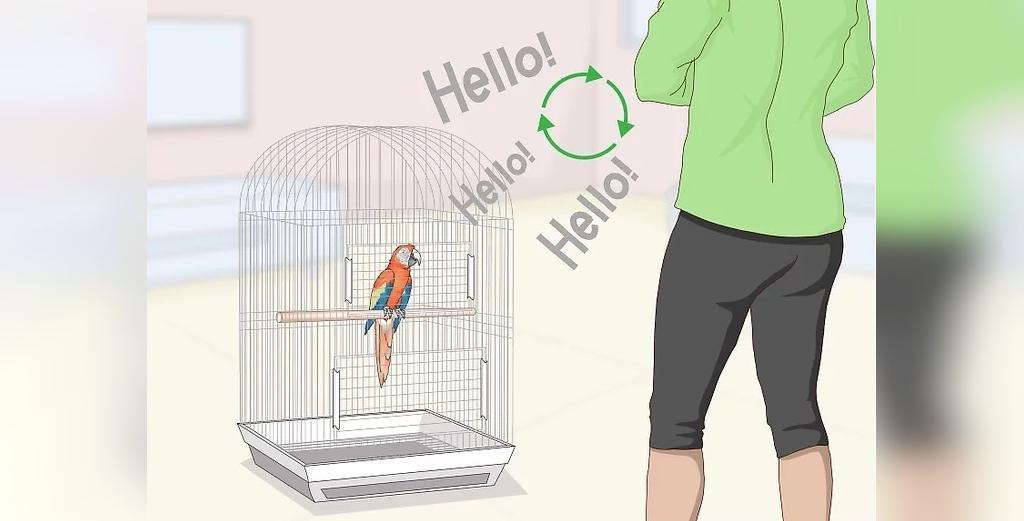 تکرار کلید یادگیری صحبت کردن طوطی