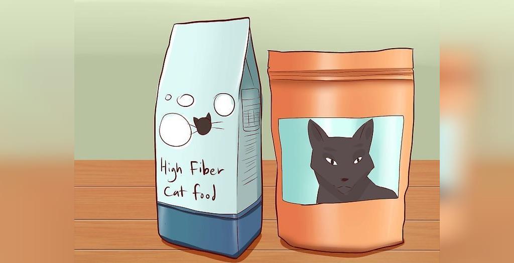 چطور از یبوست گربه جلوگیری کنیم