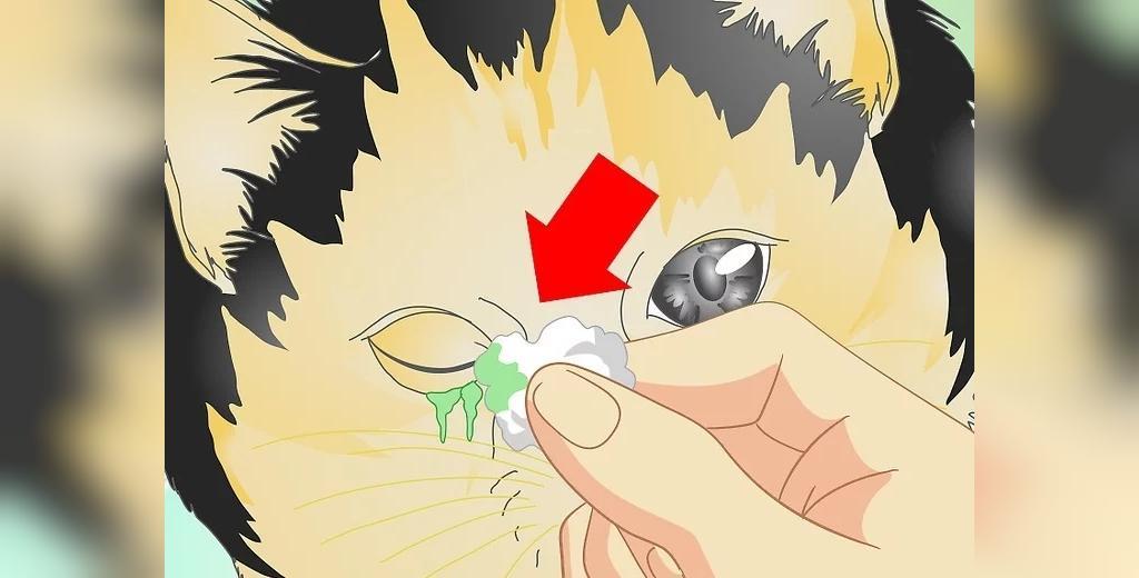 مراقبت از عفونت چشم در خانه
