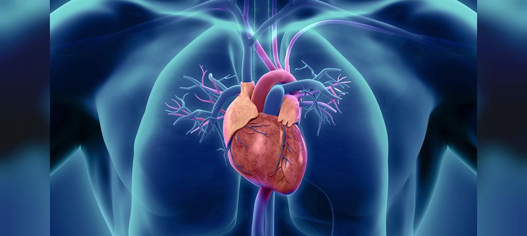 مزایای جوانه گندم برای سلامت قلب