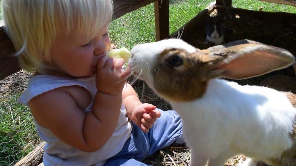 آموزش تصویری ساده ترین و کم هزینه ترین روش بازی کردن با خرگوش