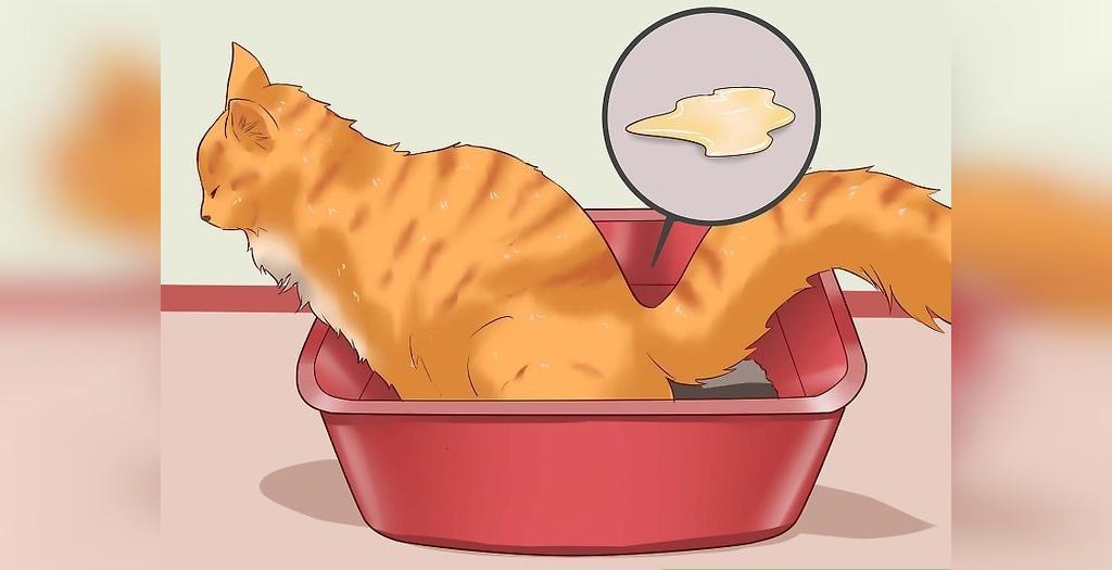 علائم یبوست گربه