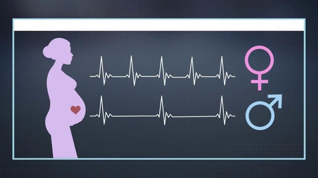آیا ضربان قلب جنین می تواند جنسیت را مشخص کند؟