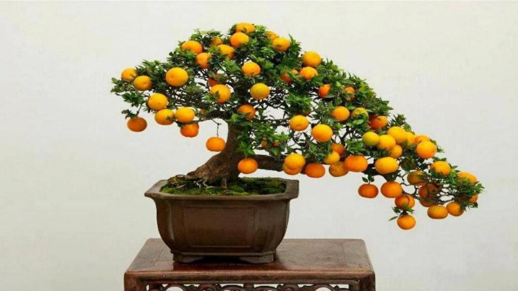 طرز تهیه سبزه پرتقال ؛ کاشت هسته پرتقال یا لیمو برای سبزه عید