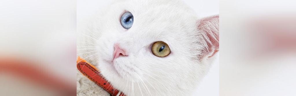 دانستنی ها عجیب در مورد گربه ها