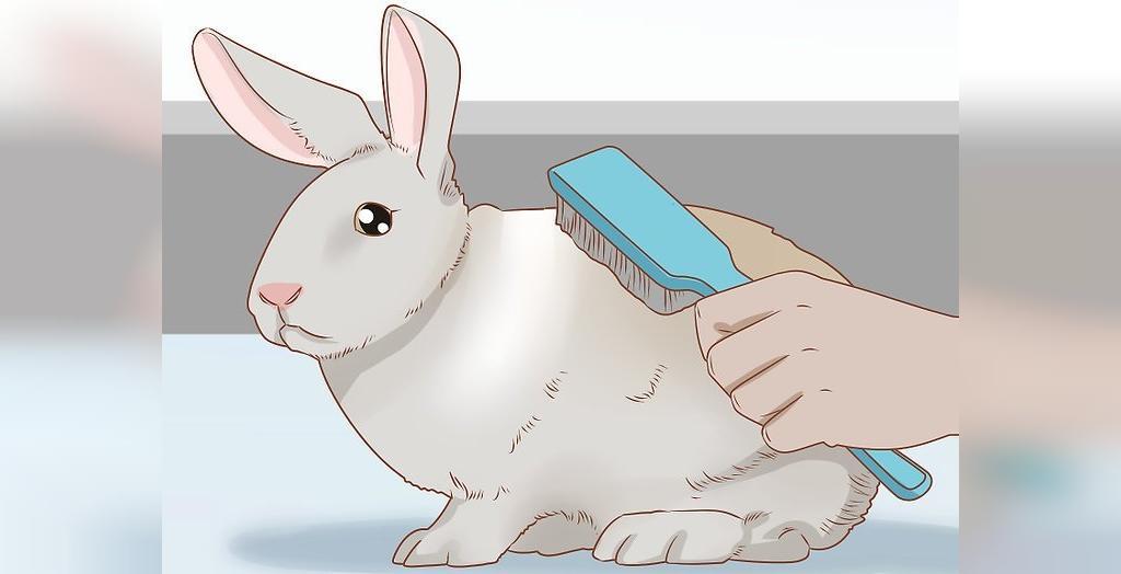 نظافت خرگوش