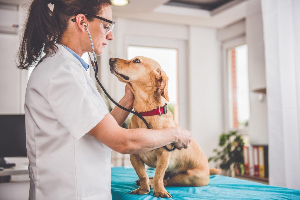 زمانی که برای استفراغ سگ باید به دامپزشک مراجعه کرد
