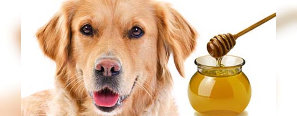 چرا سگ بزاق یا کف سفید استفراغ می کند؟