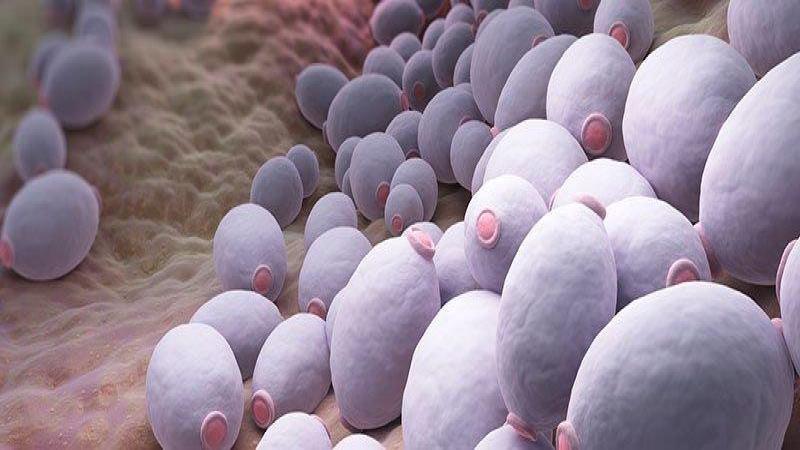 آیا سیر می تواند عفونت قارچی واژن را درمان کند؟