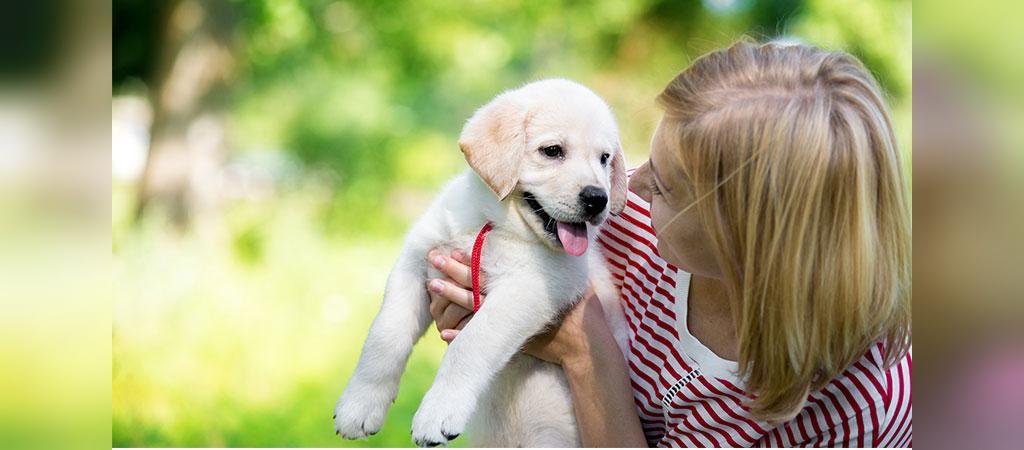 راهکارهای آموزش دستشویی رفتن سگ