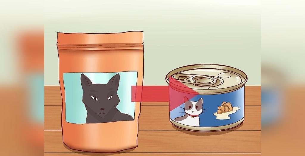 غذاهای کاملا کنسرو شده به گربه به درمان یبوست گربه کمک می کند