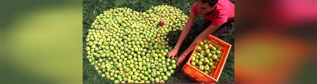 پیشگیری از سکته قلبی با سیب