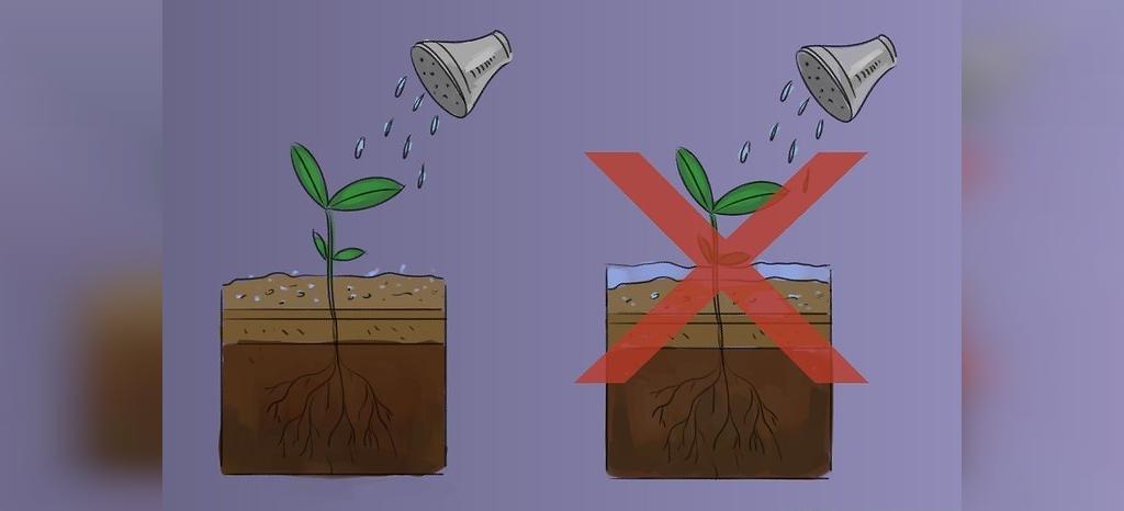 زمان کاشت بذر ریحان در گلدان
