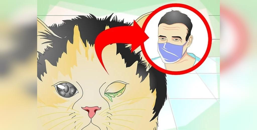 درمانی که برای عفونت چشم گربه باید به دامپزشک مراجعه کنید