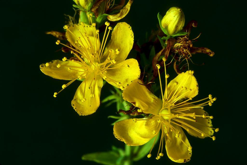 گیاهان طبیعی و فوق العاده برای افزایش عملکرد مغز، تقویت حافظه و تمرکز