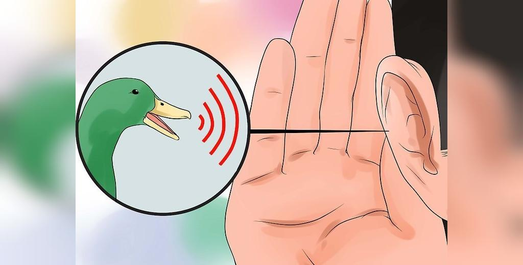 روش تشخیص جنسیت اردک از روی صدا