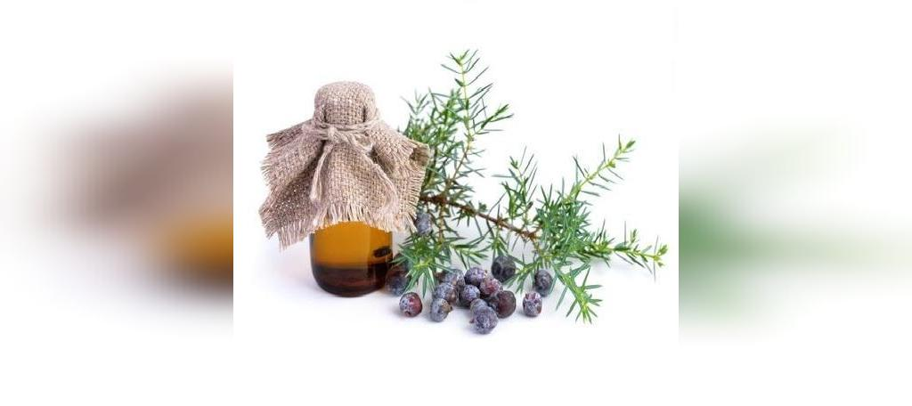 روغن روغن درخت عرعر (ارس) برای درمان سلولیت