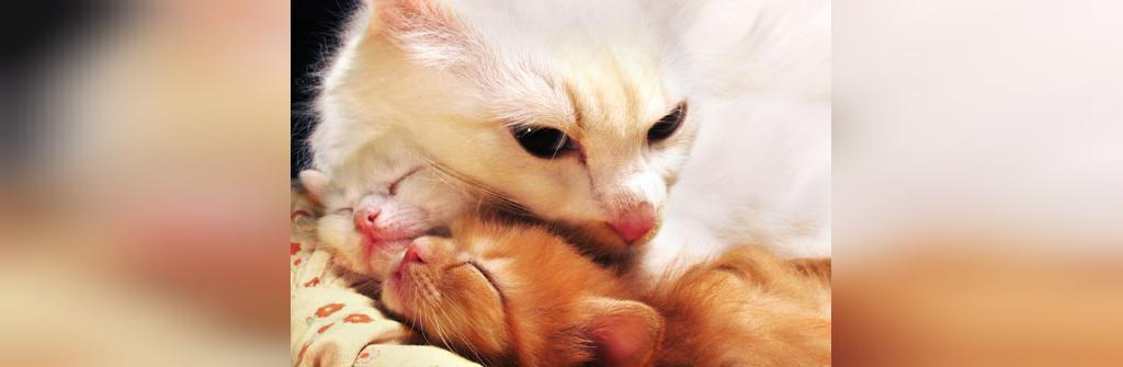 آشنایی با زبان گربه ها