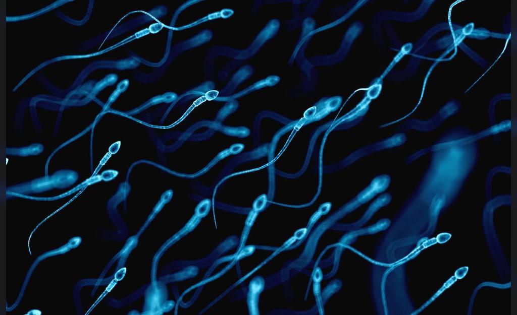 آیا اندازه بیضه بر تستوسترون یا باروری تاثیر می گذارد؟