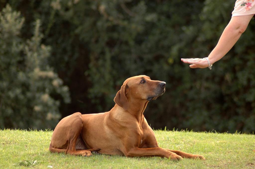 چه زمانی باید از داروهای خانگی برای استفراغ سگ استفاده کرد