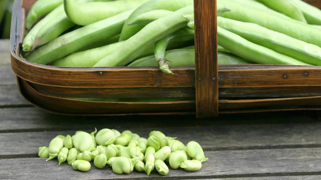خواص باقالی برای سلامتی و کاهش وزن؛ (ارزش غذایی و راه های افزودن باقلا به رژیم غذایی)