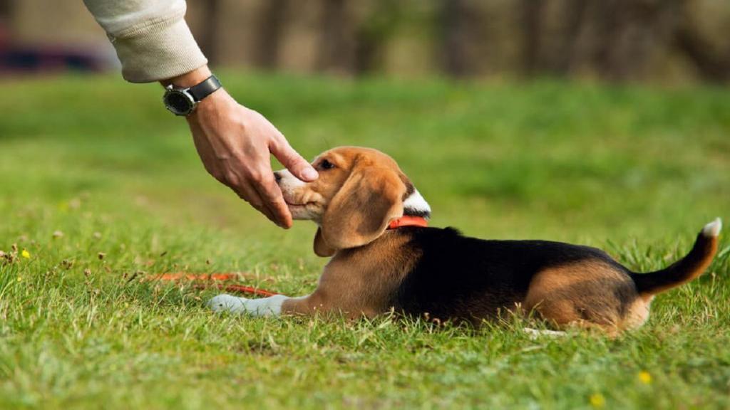 تربیت و تعلیم سگ؛ نحوه آموزش سگ، نکته ها، روش های پذیرفته شده و ابزار آموزشی لازم