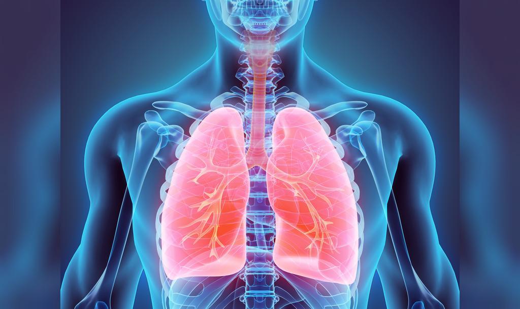 خواص کدو تنبل برای سلامت ریه
