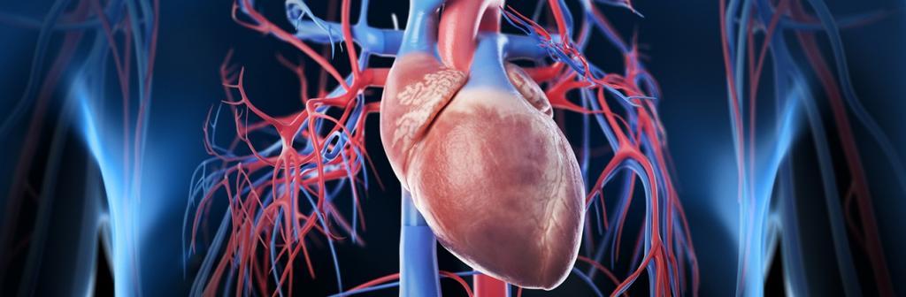 خواص زالزالک برای قلب و بیماری های قلبی