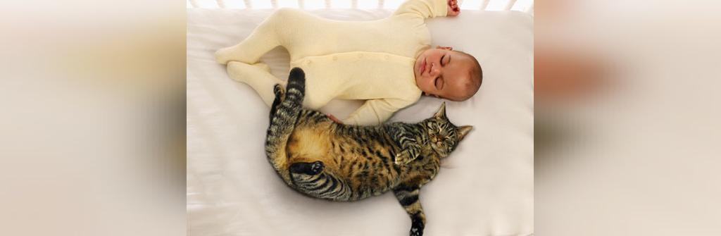 باورهای نادرست درباره گربه ها