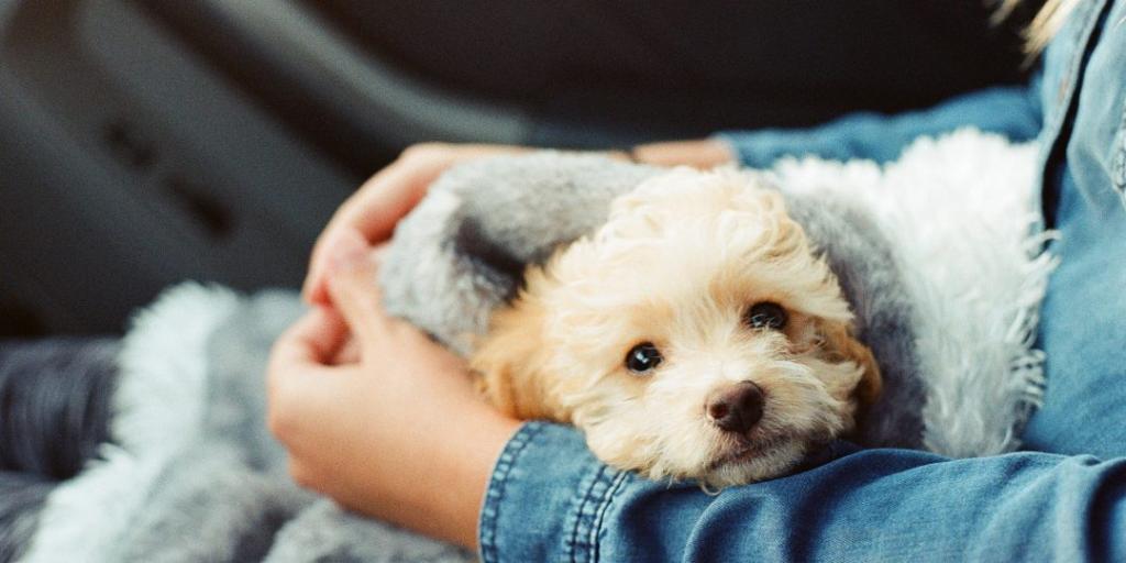 نکات نگهداری از توله سگ های تازه متولد شده