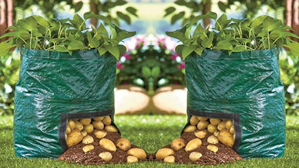 آموزش تصویری کاشت سیب زمینی در گلدان؛ کاشت سیب زمینی در خانه