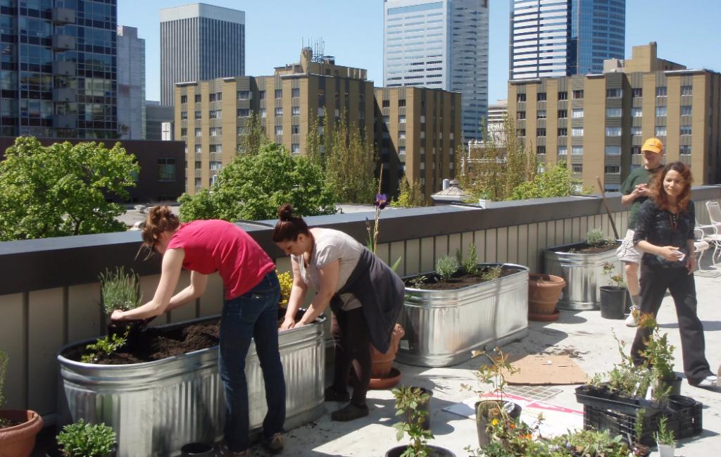 ایجاد باغچه روی پشت بام