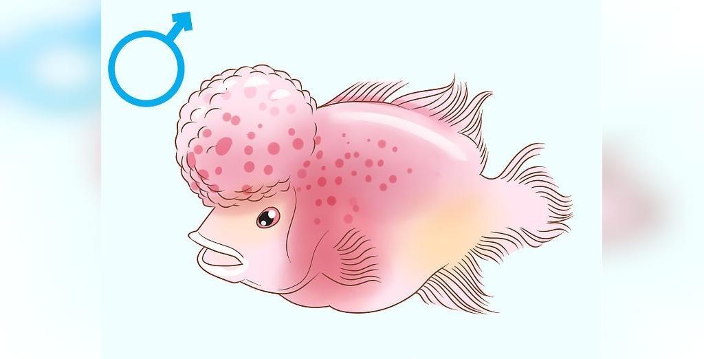 روش تعیین جنسیت ماهی