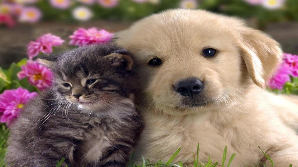 27 حقیقت و باور غلط درمورد سگ ها و گربه ها که نمی دانستید!
