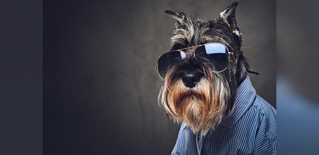 انتخاب اسم بامزه برای سگ های بزرگ  غول پیکر